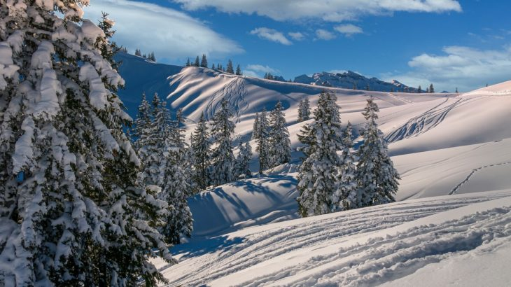 スキーへ行ってきました!